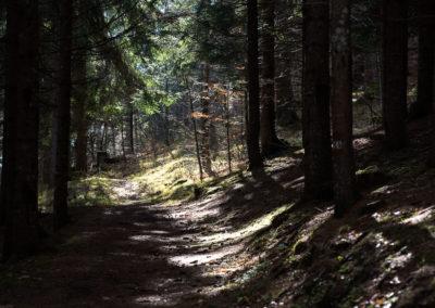 Passeggiata nel bosco